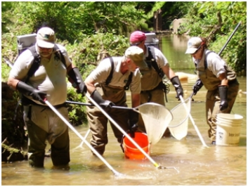 Sampling fish in a contaminated stream.